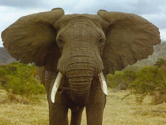 Download-Free-Elephants-The-Today-Stuff-Wallpaper